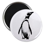 Jackass Penguin Art Magnet