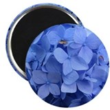 Blue hydrangea 10 Pack