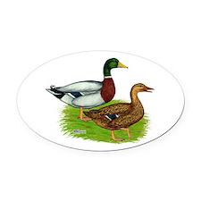 Mallard Ducks Oval Car Magnet