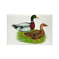 Mallard Ducks Rectangle Magnet