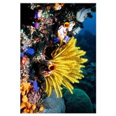 Crinoid on a coral reef Framed Print
