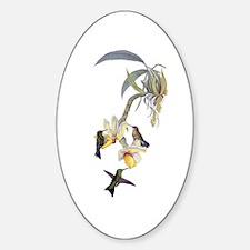 Hummingbirds Sticker (Oval)