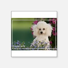 Miniature Poodle-4 Rectangle Sticker