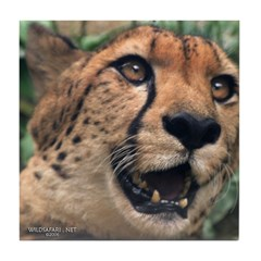 Cheetah's Gaze