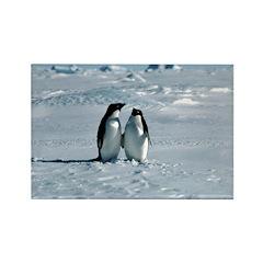 Penguin Pair Rectangle Magnet (10 pack)