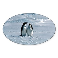 Penguin Pair Oval Decal