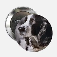 """English Sp;ringer Spaniel 2.25"""" Button (10 pack)"""