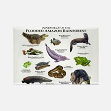 Animals of the Flooded Amazon Rainforest Rectangle