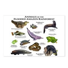Animals of the Flooded Amazon Rainforest Postcards