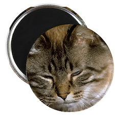 Sleepy Cat Magnet