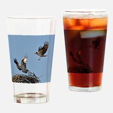 Osprey fighting Drinking Glass