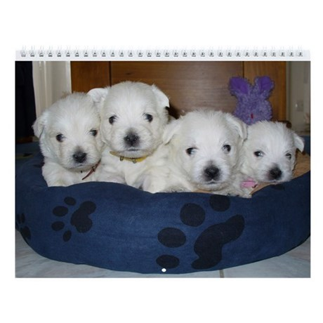 Westie Puppies Wall Calendar