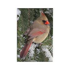 Cardinal Female Rectangle Magnet