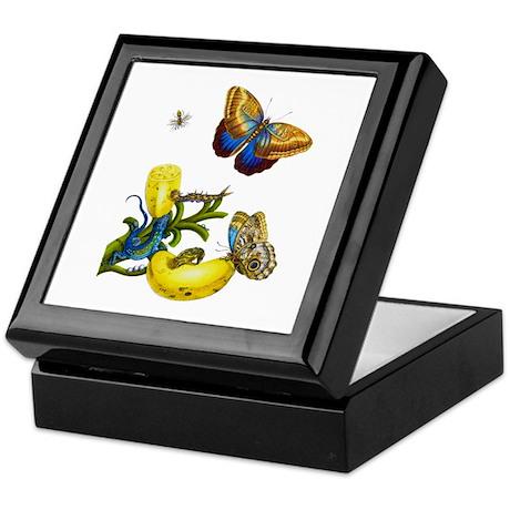 Maria Sibylla Merian Botanical Keepsake Box