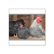 "chickens on a roost Square Sticker 3"" x 3"""