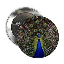 """Peacock bird 2.25"""" Button"""