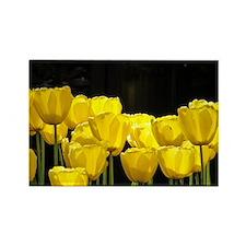 Yellow Tulips Rectangle Magnet