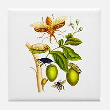Maria Sibylla Merian Botanical Tile Coaster