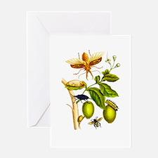 Maria Sibylla Merian Botanical Greeting Card