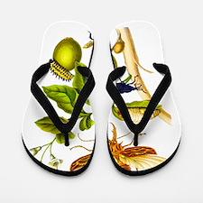 Maria Sibylla Merian Botanical Flip Flops