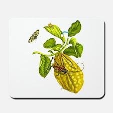 Maria Sibylla Merian Botanical Mousepad