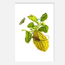 Maria Sibylla Merian Botanical Postcards (Package