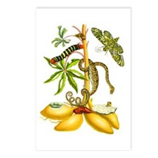 Maria Sibylla Merian Botanical Postcards (Package