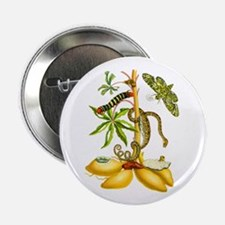 "Maria Sibylla Merian Botanical 2.25"" Button"