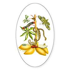 Maria Sibylla Merian Botanical Decal