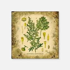 "Absinthe Botanical Illustration Square Sticker 3"""