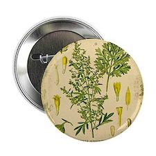 "Absinthe Botanical Illustration 2.25"" Button"