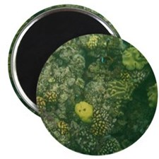 """Great Barrier Reef 2.25"""" Magnet (100 pack)"""