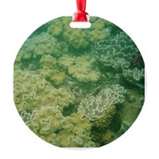 Great Barrier Reef Ornament