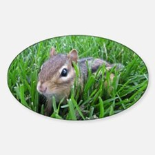 Chipmunk in the grass Decal