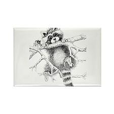 Raccoon Play Rectangle Magnet