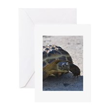 Shelly the tortoise Greeting Card