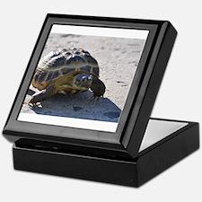 Shelly the tortoise Keepsake Box