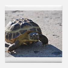 Shelly the tortoise Tile Coaster