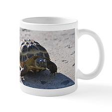Shelly the tortoise Mug