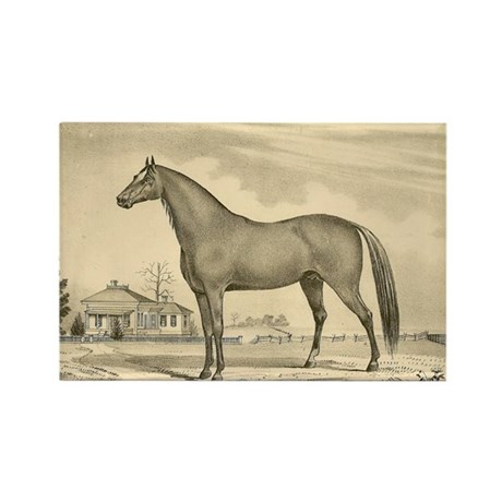 1800's hand drawn image of stud Horse Rectangle Ma