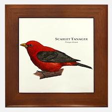 Scarlet Tanager Framed Tile
