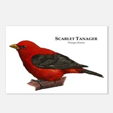 Scarlet Tanager Postcards (Package of 8)