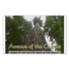 Founder's Tree - Avenue of the Giants Decal