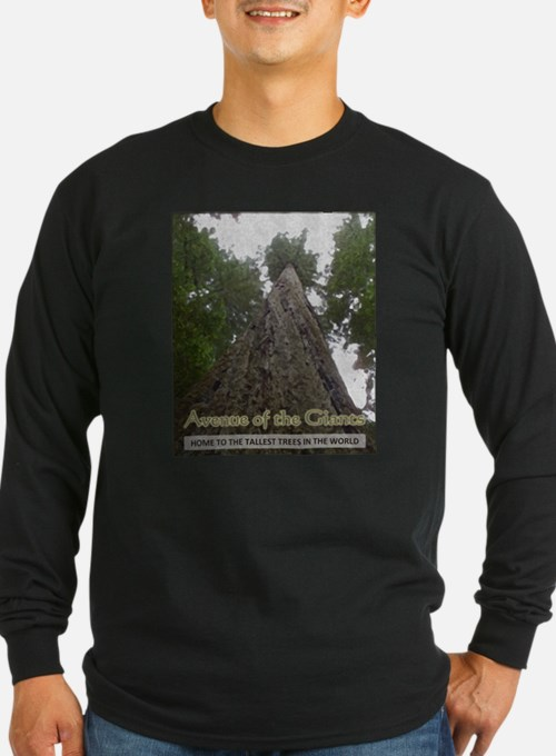 Founders Tree Tall - Avenue of the Giants T