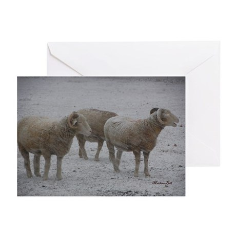 Blank Sheep Trio in Blizzard Cards (Pk of 10)