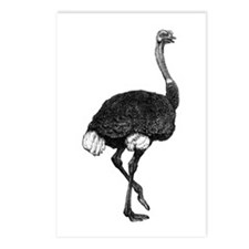 Ostrich Postcards (Package of 8)