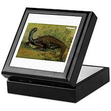 Citipati Dinosaur Keepsake Box