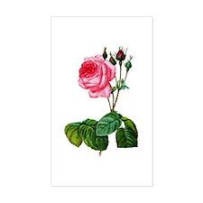 Pierre-Joseph Redoute Rose Decal
