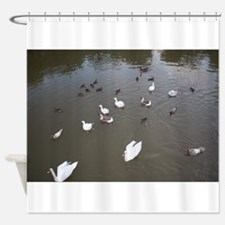 Ducks and swans Shower Curtain