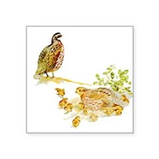 "Bobwhite Quail Square Sticker 3"" x 3"""